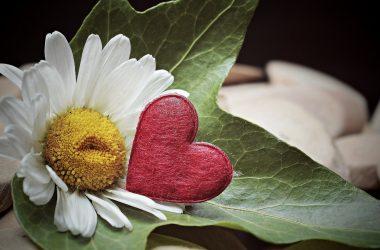 Blume und Herz